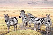 Tanzania Wildlife Adventure