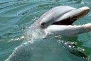 Key West Dolphin Safari Charters