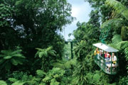 Rainforest Sky Tram in St Lucia