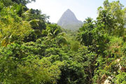 St Lucia Rainforest