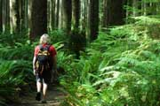 Olympic National Park Hiking