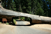 Sequoia National Park Facts